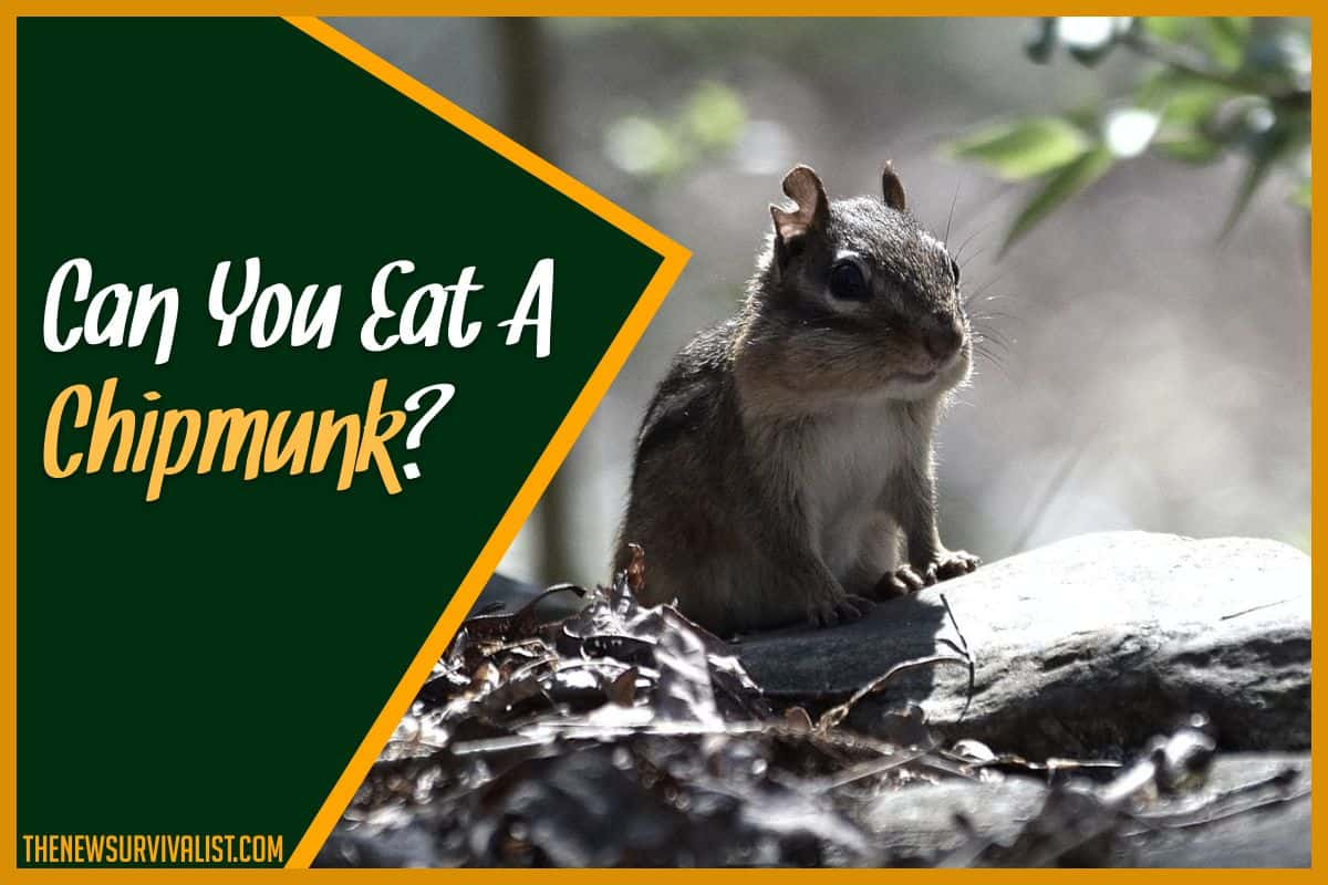 Can You Eat A Chipmunk