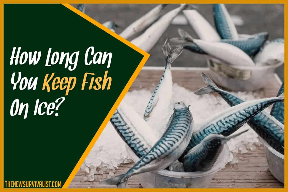 How Long Can You Keep Fish On Ice