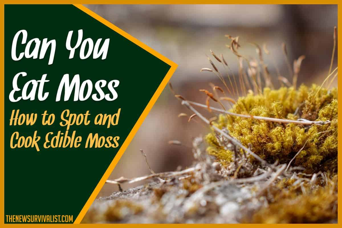 Can You Eat Moss - How to Spot and Cook Edible Moss
