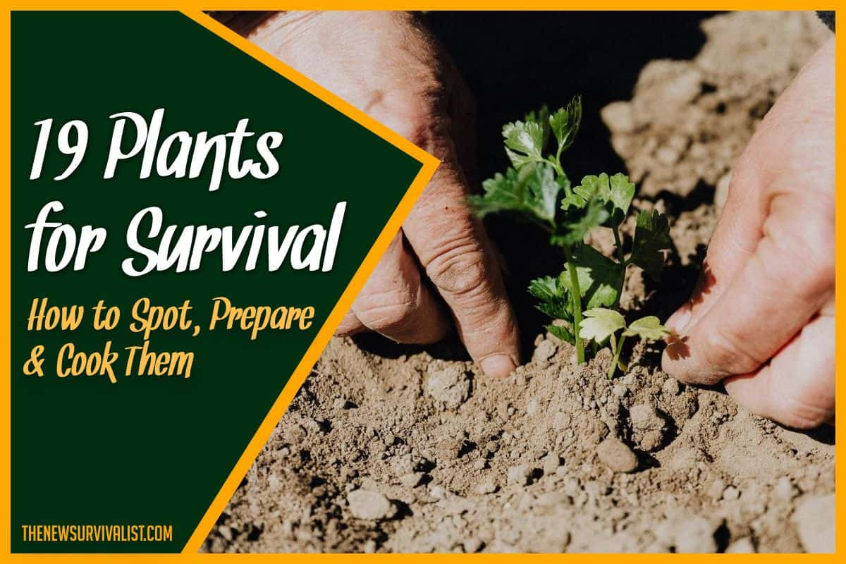 19 Plants for Survival - How to Spot, Prepare & Cook Them (edit)