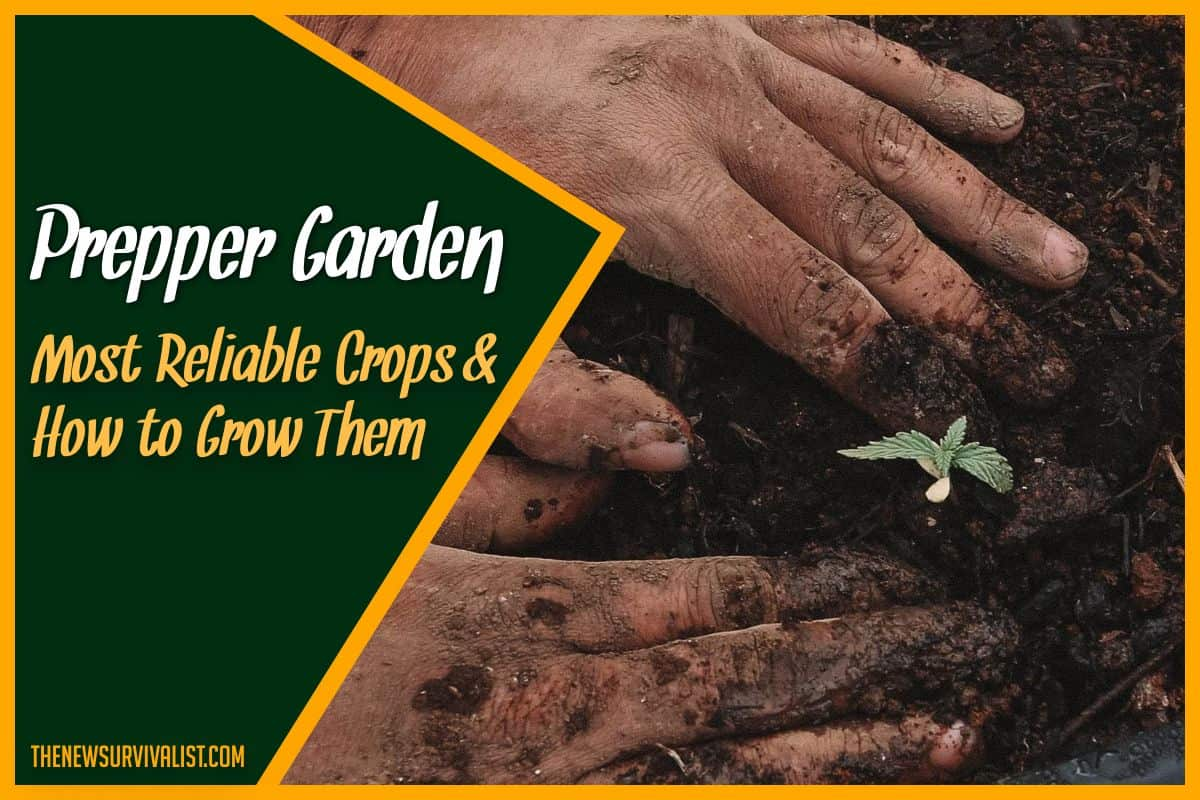 Prepper Garden Most Reliable Crops & How to Grow Them