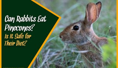 Can Rabbits Eat Pinecones - Is It Safe for Their Diet