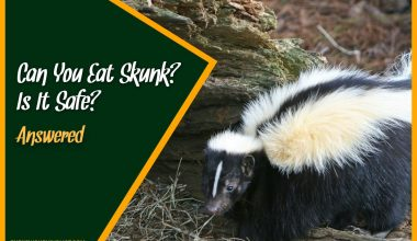 Can You Eat Skunk Is It Safe #Answered