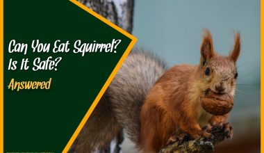 Can You Eat Squirrel Is It Safe #Answered