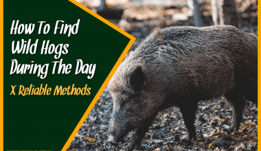 How To Find Wild Hogs During The Day X Reliable Methods