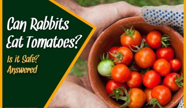 Can Rabbits Eat Tomatoes Is it Safe #Answered