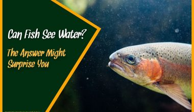 Can Fish See Water The Answer Might Surprise You