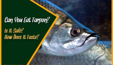 Can You Eat Tarpon Is It Safe How Does It Taste