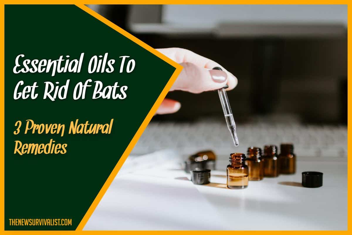 Essential Oils To Get Rid Of Bats 3 Proven Natural Remedies